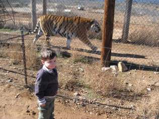 Ari playing tag with a tiger.